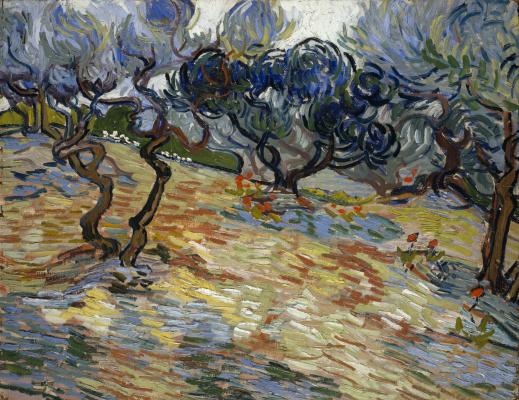 Оливковые деревья: ярко-голубое небо