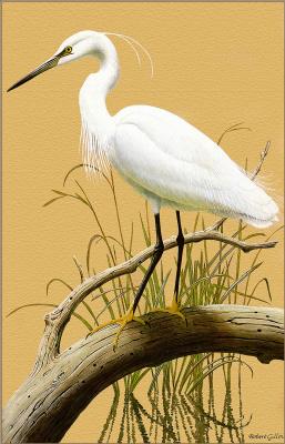 Роберт Гилмор. Малая белая цапля