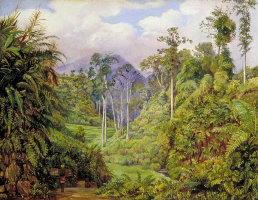 Marianna North. Tree ferns and forest felling, Java