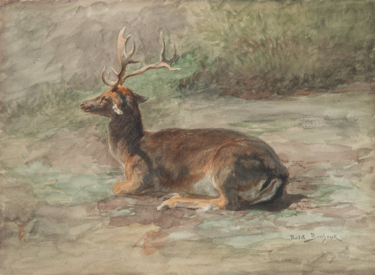 Rose Bonhur. Lying stag