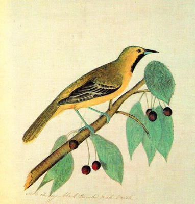John James Audubon. Oriole