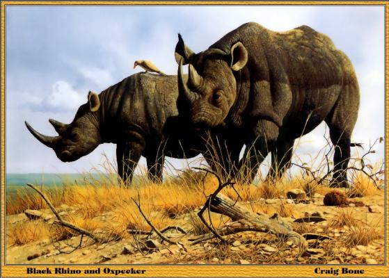 Крейг Джон Боун. Носороги