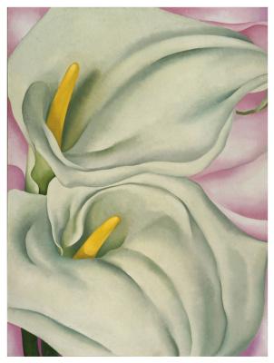 Georgia O'Keeffe. Two Calla lilies on pink