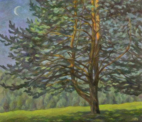 Andrei Ivanovich Borisov. Big pine tree