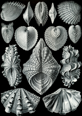 """Ernst Heinrich Haeckel. Akefaly. """"The beauty of form in nature"""""""