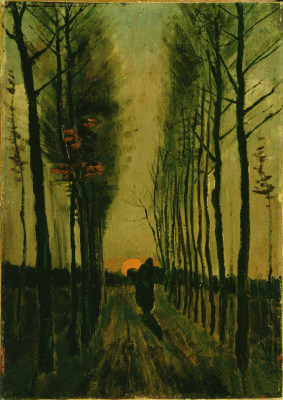 Poplar alley at sunset