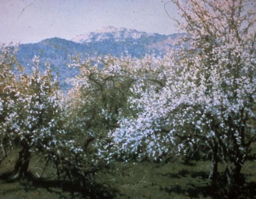 Ричард Уитни. Заброшенный сад