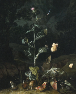 Otto Marceus van Scriec. Night forest still life with thistle, butterflies, mushrooms and frog
