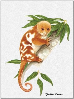 Марион Уэстмакотт. Австралийские млекопитающие 22