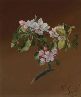 The branch of a blossoming apple tree