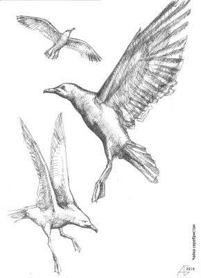 Александр Викторович Беляков. Large silver gulls. From the series Birds.