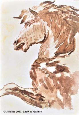 Jurita. Profile of Horse