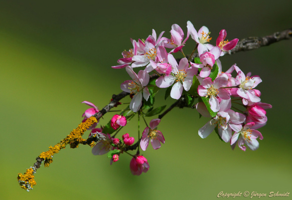 Юрген Шмидт. Paints of spring