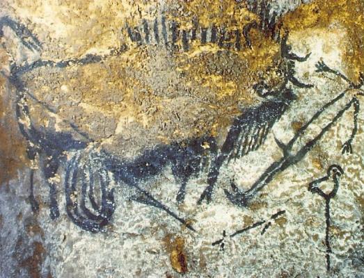 Раненый бизон нападает на человека