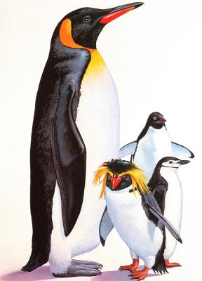 Ли Маклеод. Пингвины