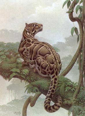Эдвард Биерли. Дымчатый леопард