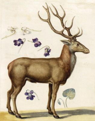 Giuseppe Arcimboldo. Deer