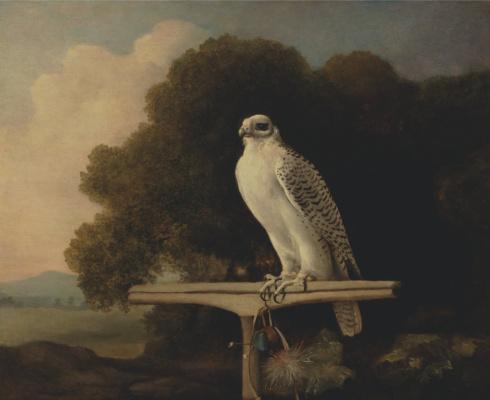 George Stubbs. Greenland Falcon