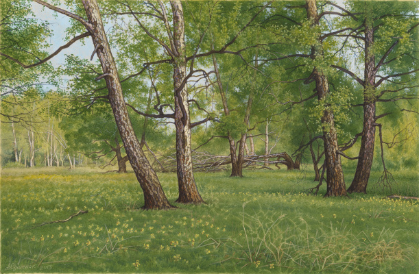 Alexander Mikhailovich Sushenok. Birch Grove in May