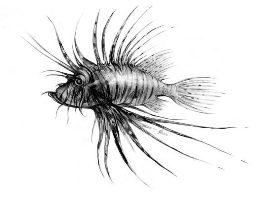Platon Nikolayevich Starodubov. Zebra fish