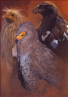 Чинг Рау Харрис. Африканские крылатые хищники