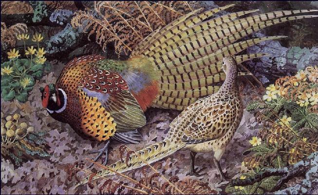 Чарльз Танниклифф. Демонстрация фазана