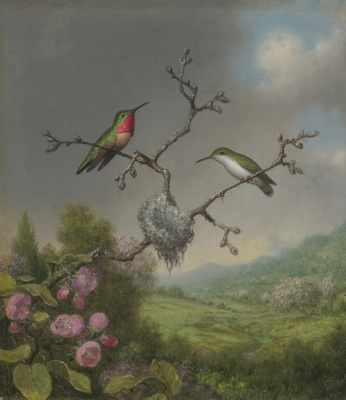 Martin Johnson Head. Hummingbirds and a branch of a blossoming apple tree