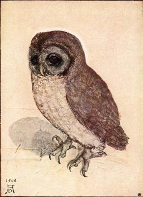 Albrecht Durer. Little owl