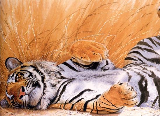 Тревор Бойер. Валяющийся тигр