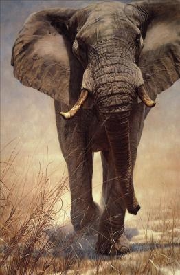 Джон Банович. Слон