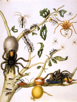 Maria Sibylla Merian. Guavas with giant crab spiders, orb-web spiders, umbrella ants, cockroaches, tarantulas and hummingbirds. Suriname