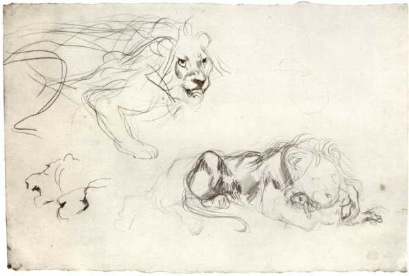 Eugene Delacroix. Sheet with sketches of a lion
