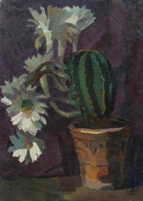 Mikhail Vladimirovich Nadezhdin. The cactus blooms