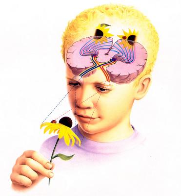 Джейн Флок. Мозг