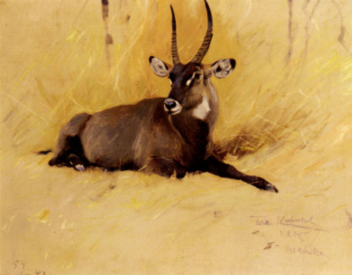 Фридрих Вильгельм Кунерт. Обыкновенный водяной козёл