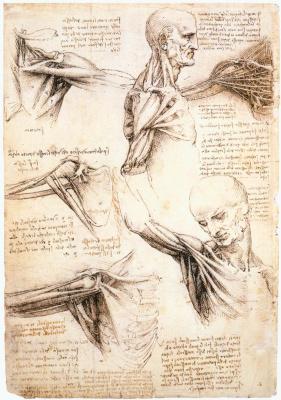 Леонардо да Винчи. Анатомические зарисовки плеча