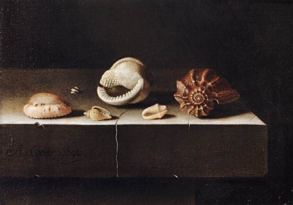 Adrian Coort (Coorte). Still life with six shells on a stone slab