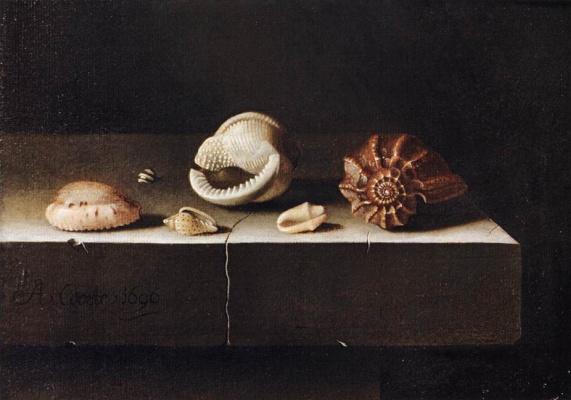 Адриан Коорт (Коорте). Натюрморт с шестью раковинами на каменной плите
