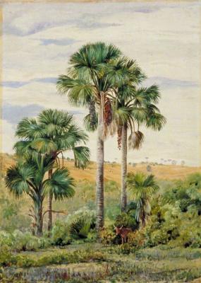 Марианна Норт. Пальмы бурити и старые араукарии, Бразилия