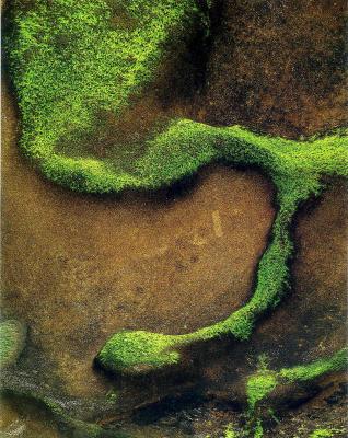 Элиот Портер. Лесной пейзаж 7