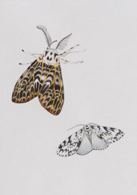 Ekaterina Sergeevna Yurashevich. Вutterflies