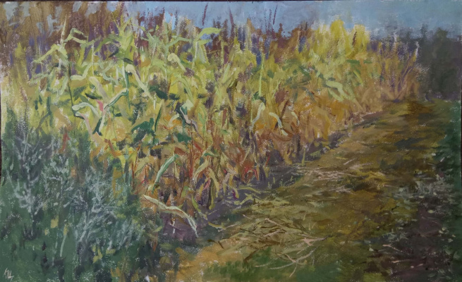 Christina Shchekina. Corn field, sketch