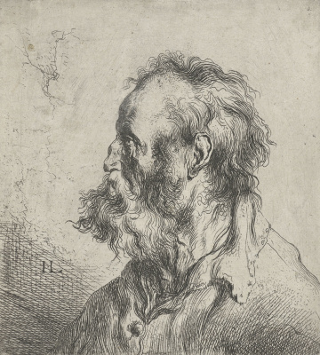 Jan Lievens. Profile of a bearded man in shirt