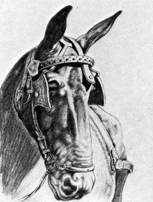 Эмилио Бонет Казанова. Лошадь