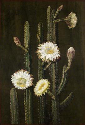 Марианна Норт. Бразильский колоннарный кактус