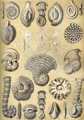 """Ernst Heinrich Haeckel. Chamber (Kornoozhki). """"The beauty of form in nature"""""""