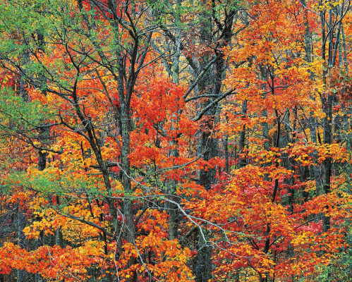 Christopher Burkett. Autumn in the Cherokee Forest