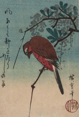 Утагава Хиросигэ. Птица на ветке глицинии