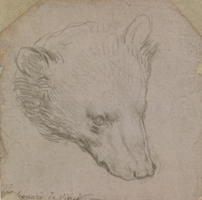 Leonardo da Vinci. The head of the bear