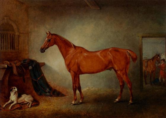 Джон Фернелей. Жеребец и собака